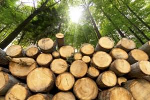 Holz - Der starke Werkstoff